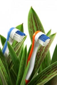 toothbrushesingreen_sm